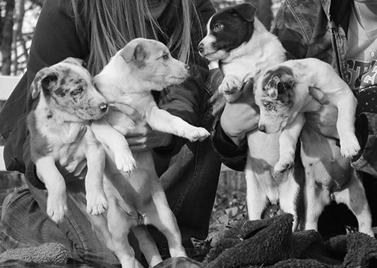 Hera's Puppies
