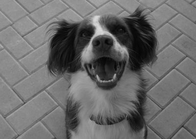 Piper – Adoption Pending!