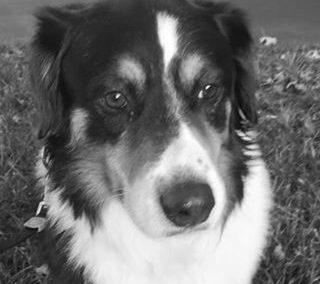 Jake – Adoption Pending!